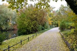 Fotografien eines Herbstspaziergangs durch den Großen Tiergarten am 21.10.2015